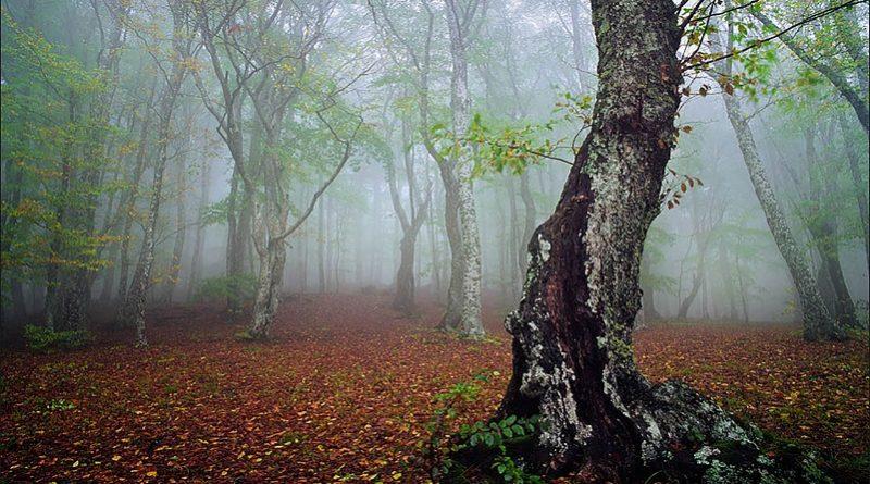 جنگل الیمستان   عاشقان طبیعت ایران
