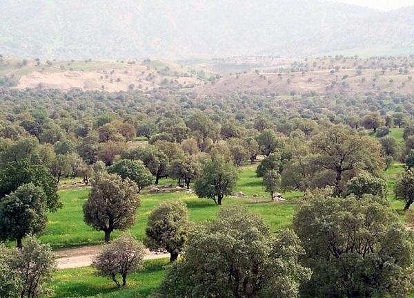 تنگ رازیانه | عاشقان طبیعت ایران | آثار طبیعی ملی تنگ رازیانه استان ایلام