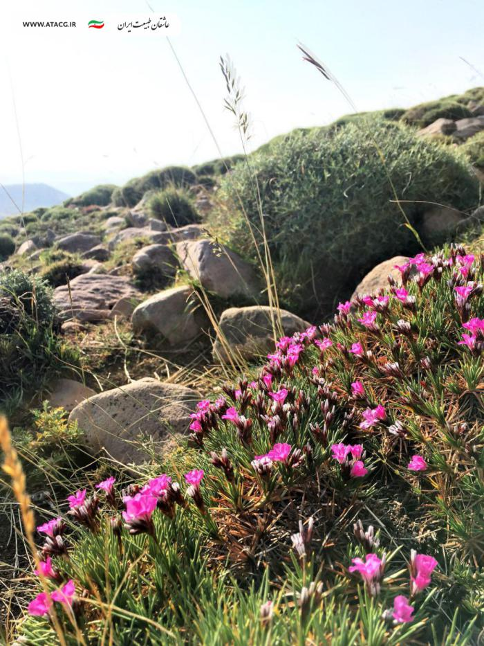 قله سهند | عاشقان طبیعت ایران | صعود به قله سهند و جام | سهند عروس کوههای ایران