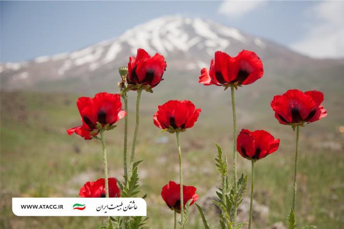 دماوند | عاشقان طبیعت ایران | قله دماوند بلندترین قله ایران | صعود به قله دماوند