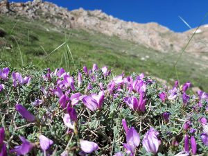 قله سماموس | عاشقان طبیعت ایران | بام استان گیلان | صعود به قله سماموس