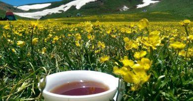 طبیعتگردی | عاشقان طبیعت ایران | اکوتوریسم | تاریخچه طبیعتگردی